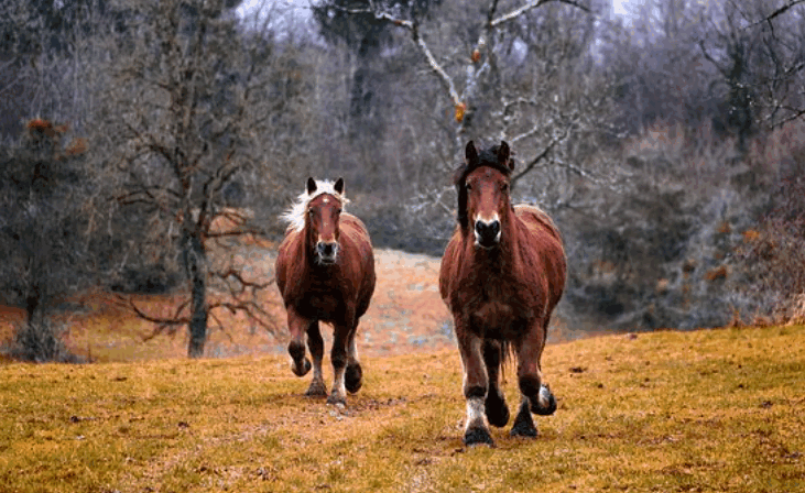 horsebreed2
