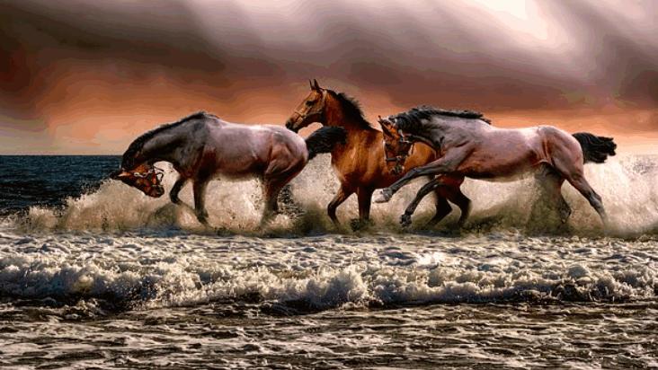 horsebreed4