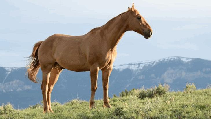 horsebreed5